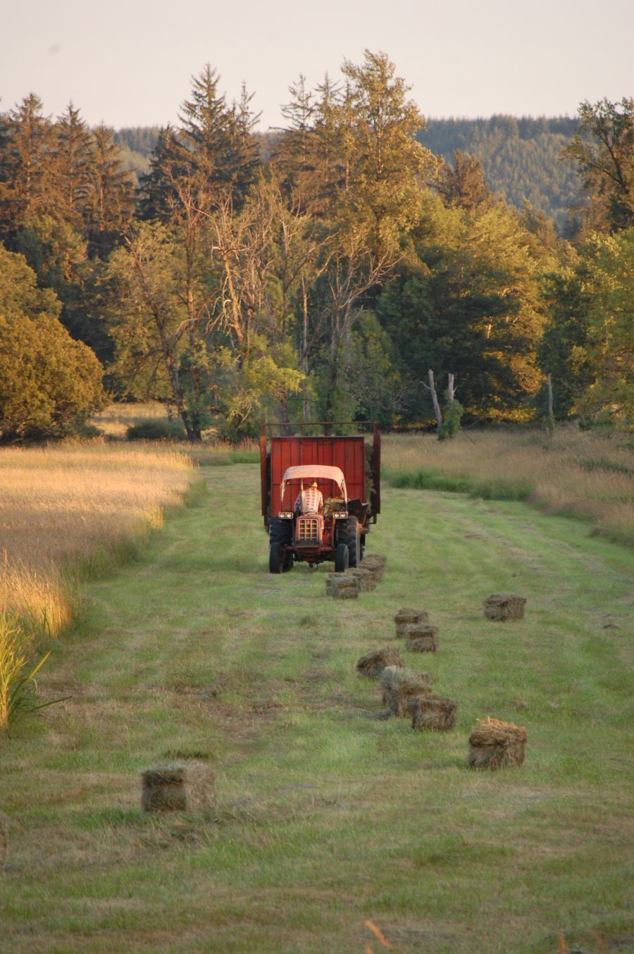 A Farmer Collects Bales of Hay in Elma – by Jessica Roberts