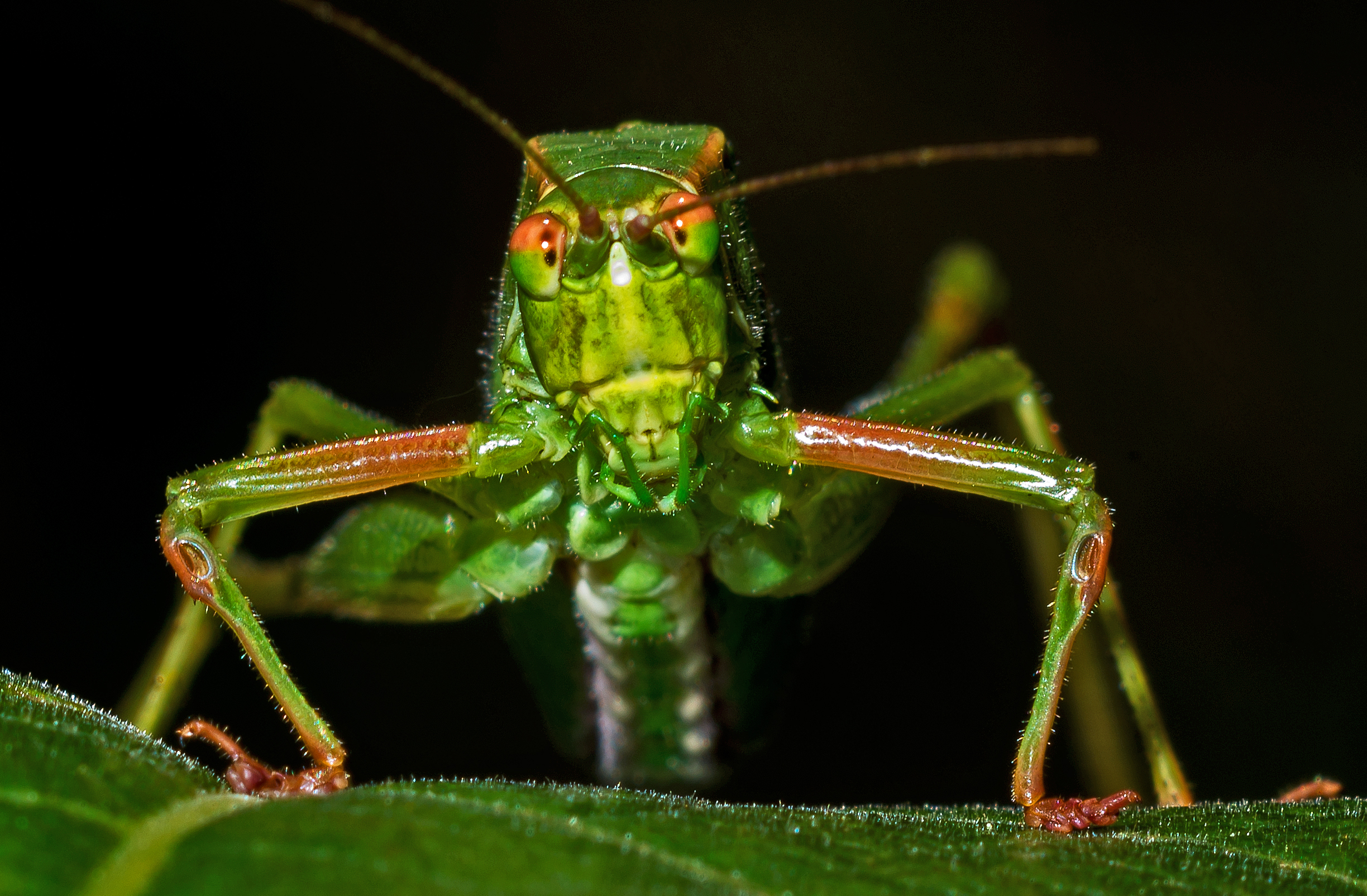 Our Six-Legged Inspector General – Honorable Mention, by Jeffrey Seldomridge