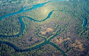 Photo of aerial view of Chehalis River