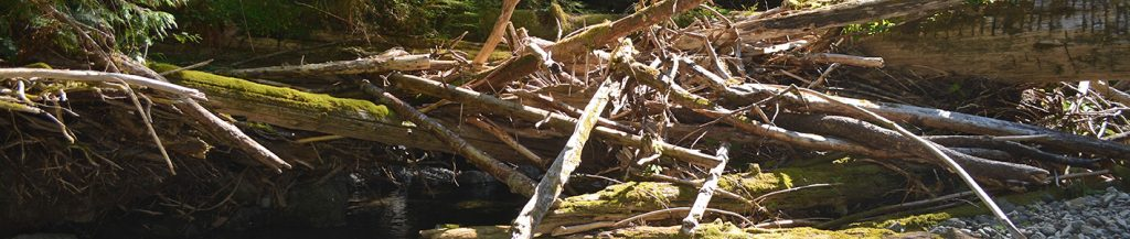 Photo of woody river debris